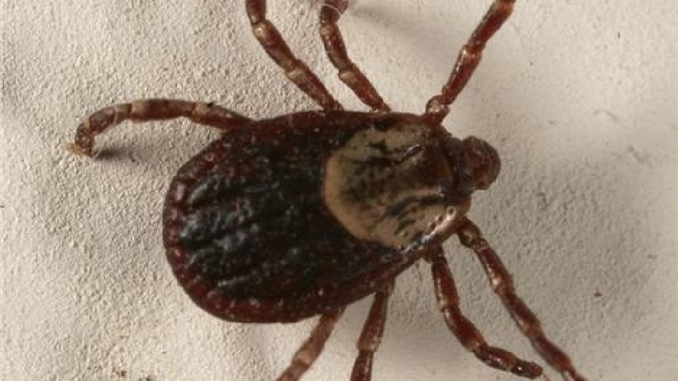 Time to take measures to protect your animals from ticks   WACH