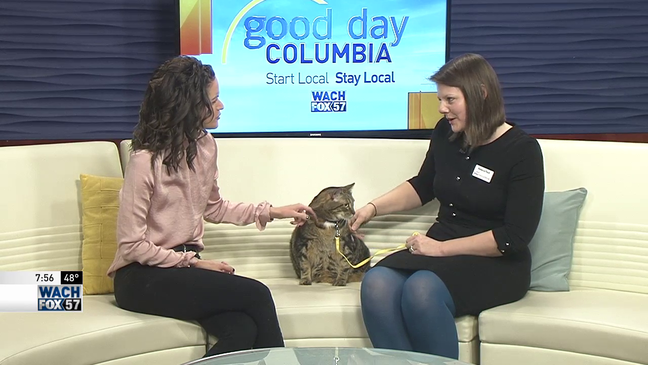 Tuesday Tails: Taz the cat-dog with more loving to give!   WACH